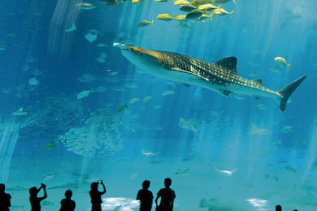 acuario-inbursa